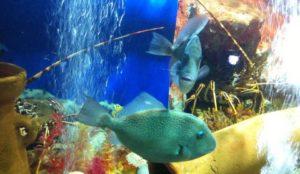 Aquarium Cap Blanc in San Antonio Ibiza