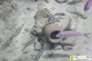 Aquarium Cap Blanc San Antonio Ibiza - lot of fish
